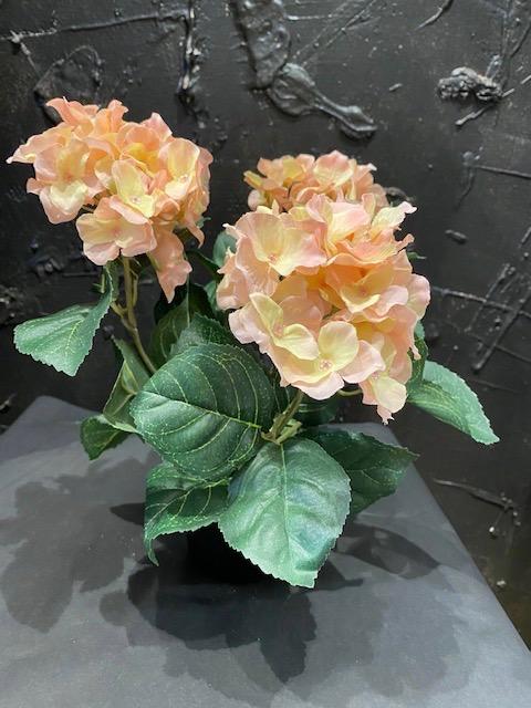 Silkkikukat, ruukku hortensia, vaaleanpunainen