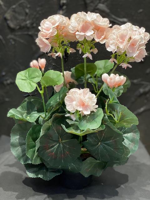 Silkkikukat, Pelargonia,  vaalea roosa