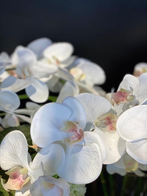 Silkkikukat, orkidea